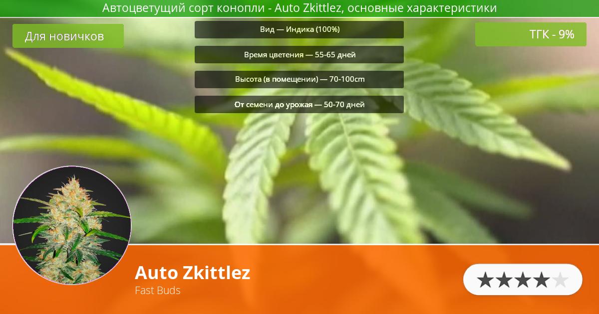 Инфограмма сорта марихуаны Auto Zkittlez