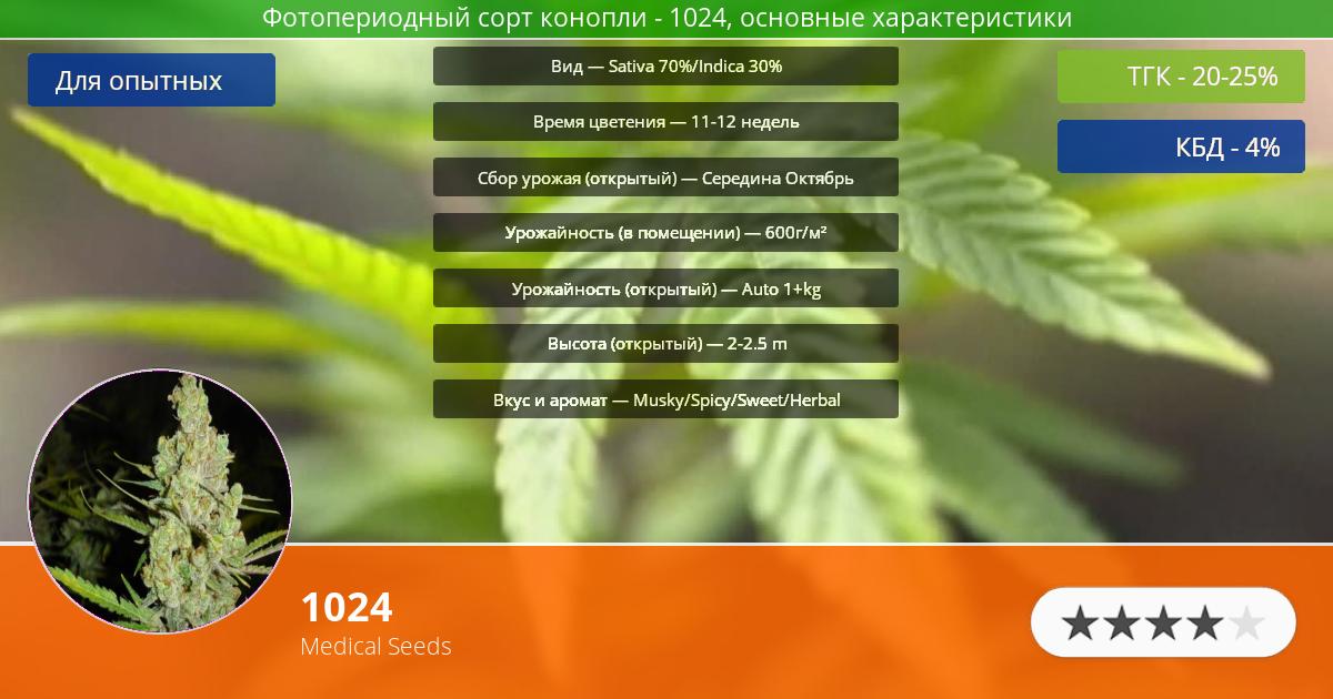 Инфограмма сорта марихуаны 1024