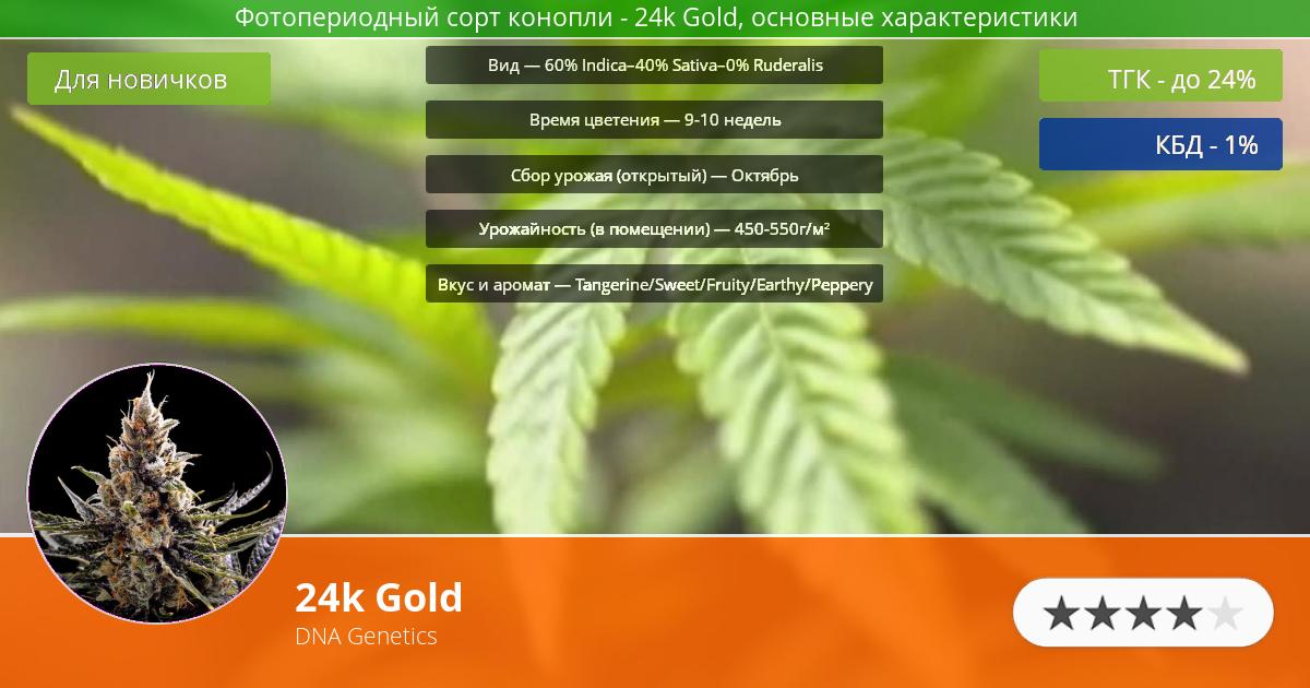 Инфограмма сорта марихуаны 24k Gold