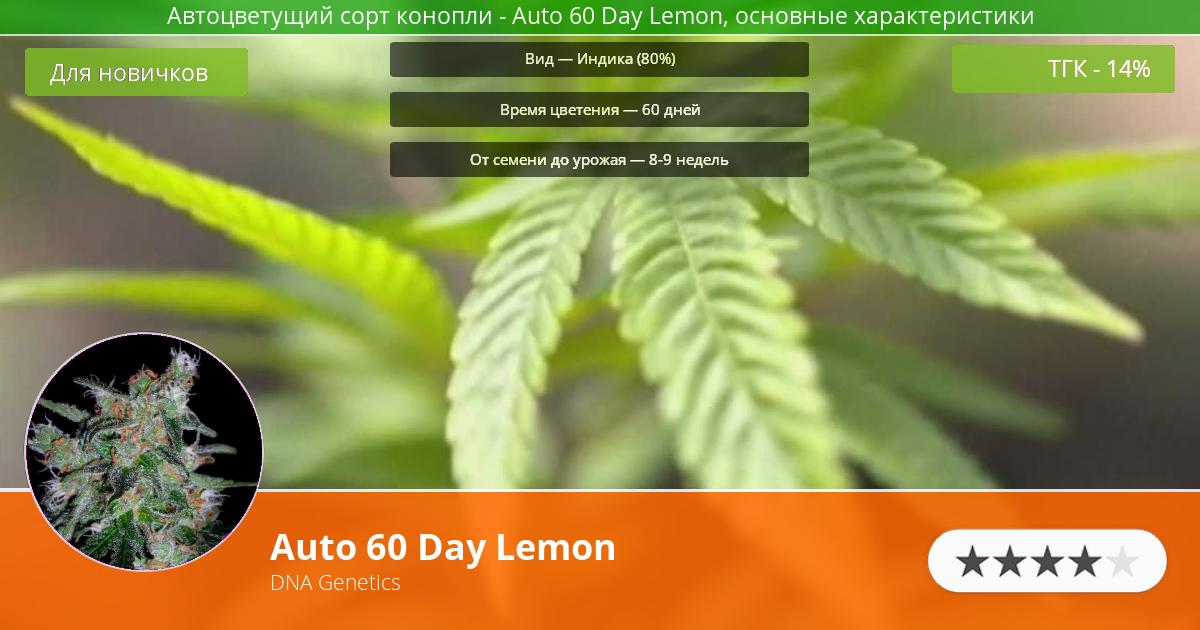 Инфограмма сорта марихуаны Auto 60 Day Lemon