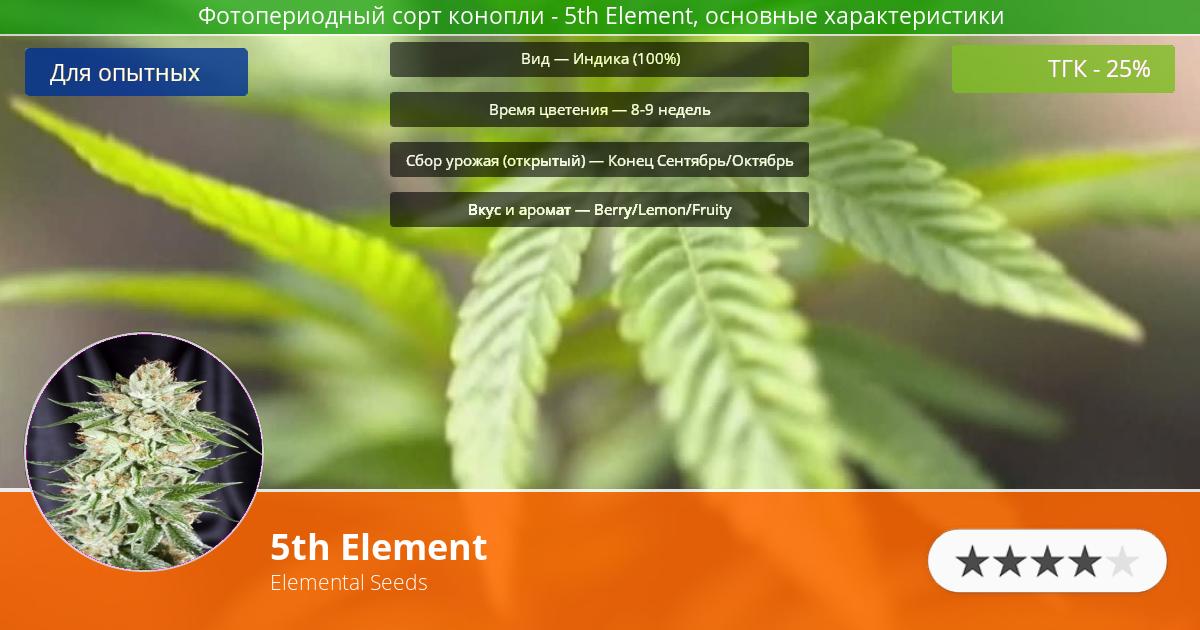 Инфограмма сорта марихуаны 5th Element