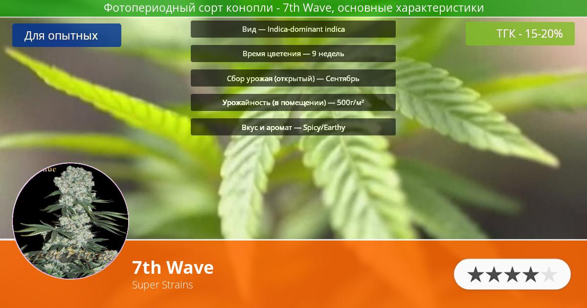 Инфограмма сорта марихуаны 7th Wave