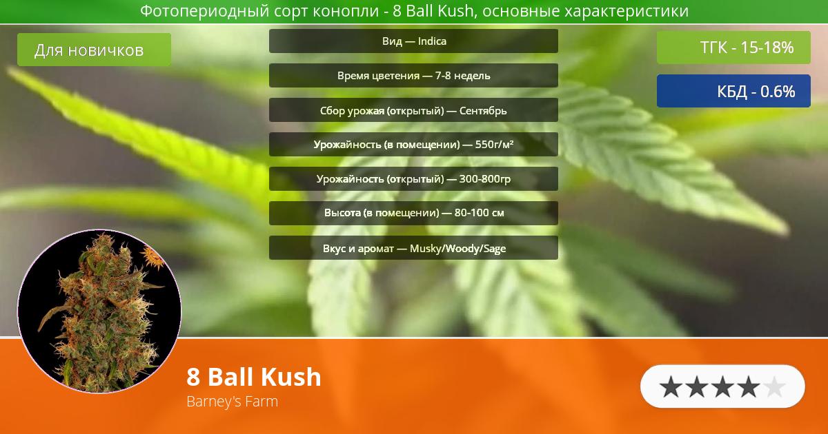 Инфограмма сорта марихуаны 8 Ball Kush