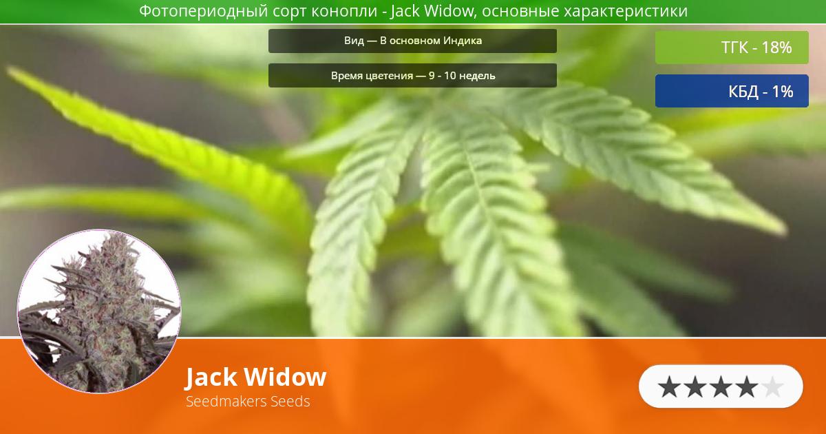 Инфограмма сорта марихуаны Jack Widow