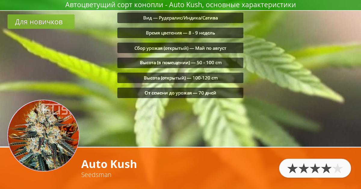 Инфограмма сорта марихуаны Auto Kush