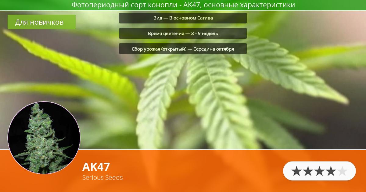 Инфограмма сорта марихуаны AK47