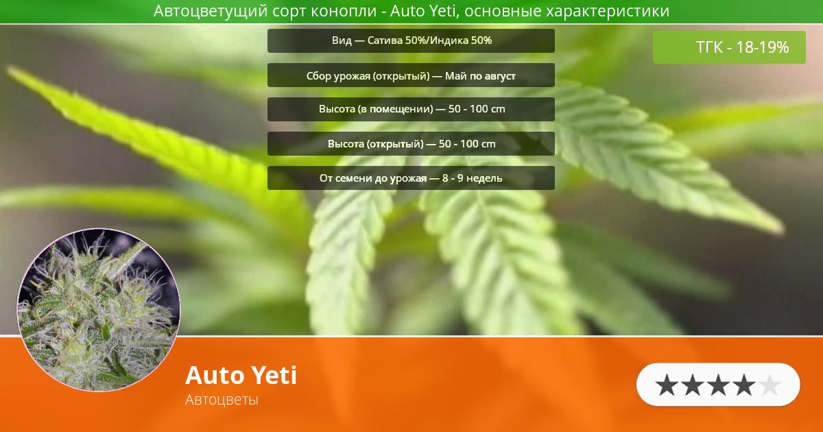 Инфограмма сорта марихуаны Auto Yeti