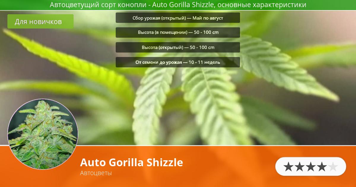 Инфограмма сорта марихуаны Auto Gorilla Shizzle