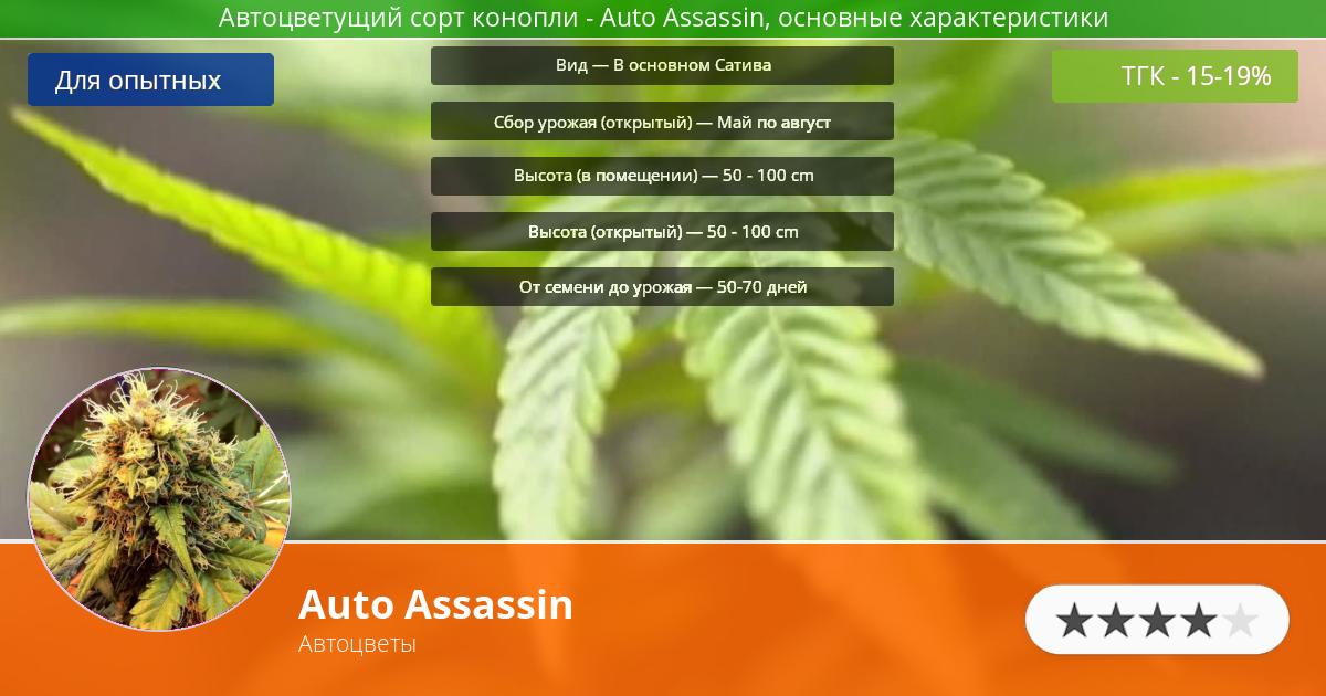 Инфограмма сорта марихуаны Auto Assassin