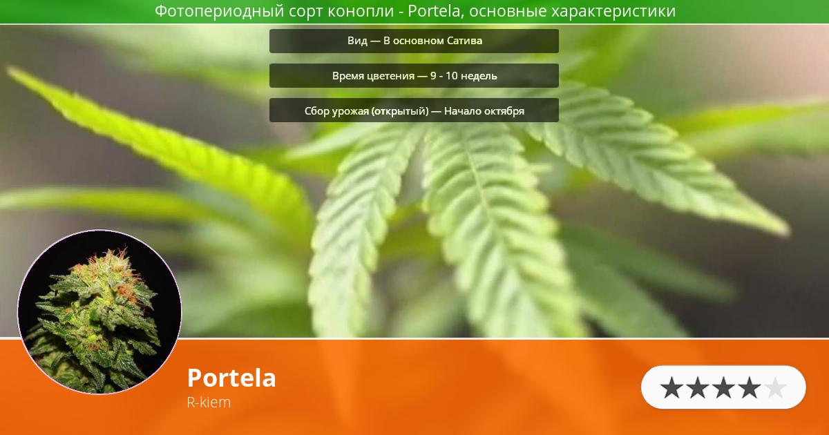 Инфограмма сорта марихуаны Portela