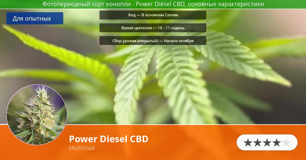 Инфограмма сорта марихуаны Power Diesel CBD