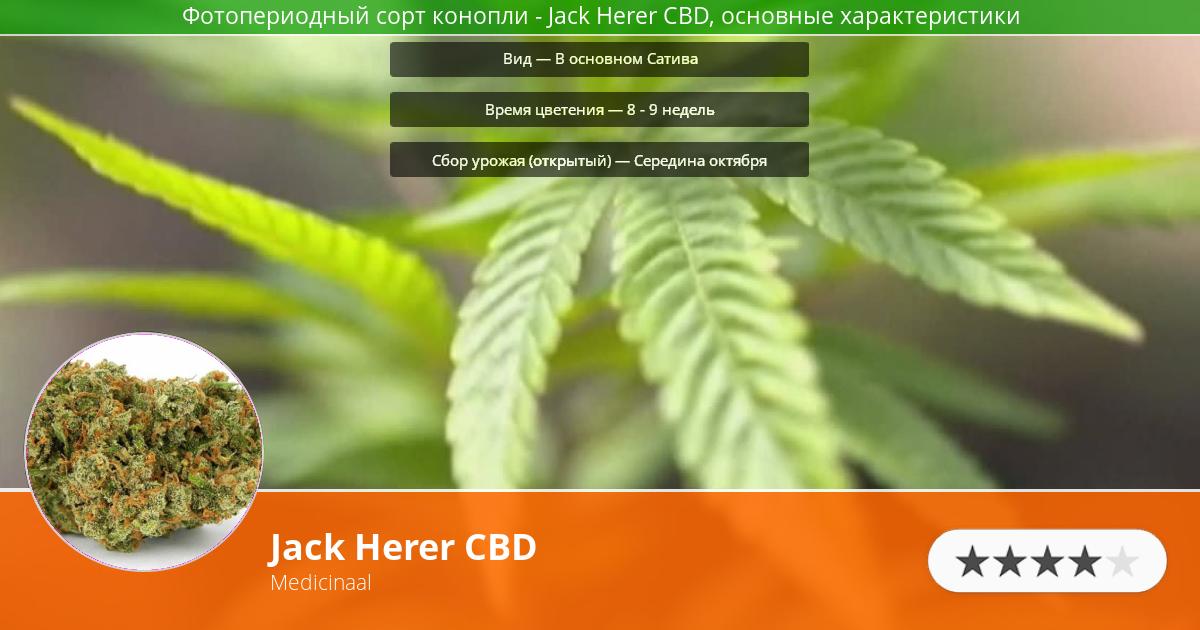 Инфограмма сорта марихуаны Jack Herer CBD