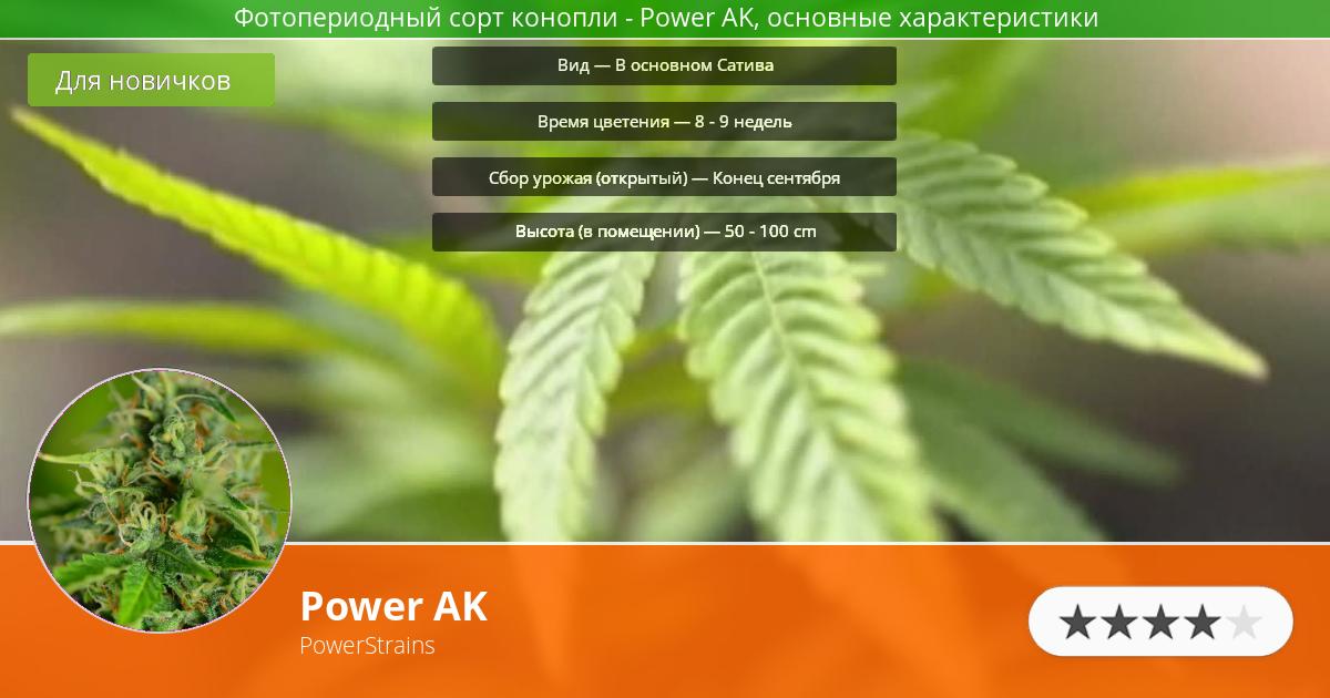 Инфограмма сорта марихуаны Power AK