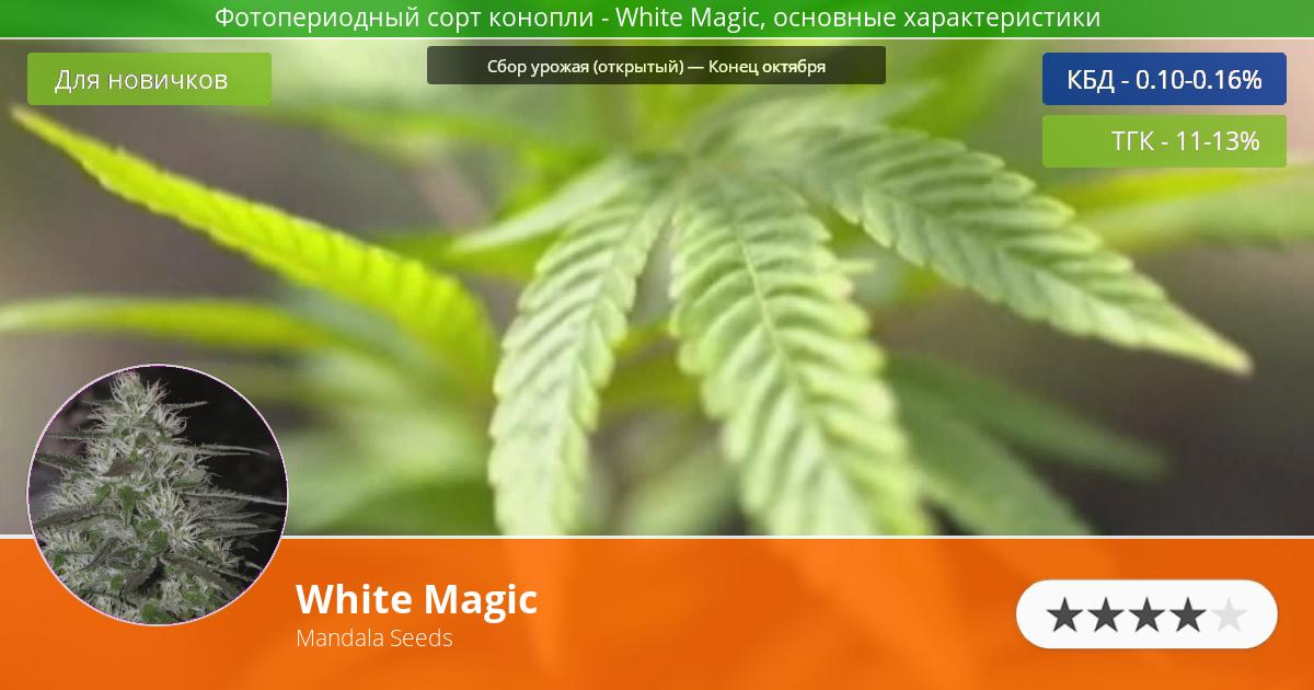 Инфограмма сорта марихуаны White Magic