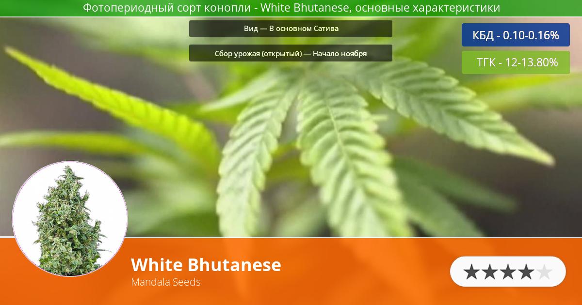 Инфограмма сорта марихуаны White Bhutanese