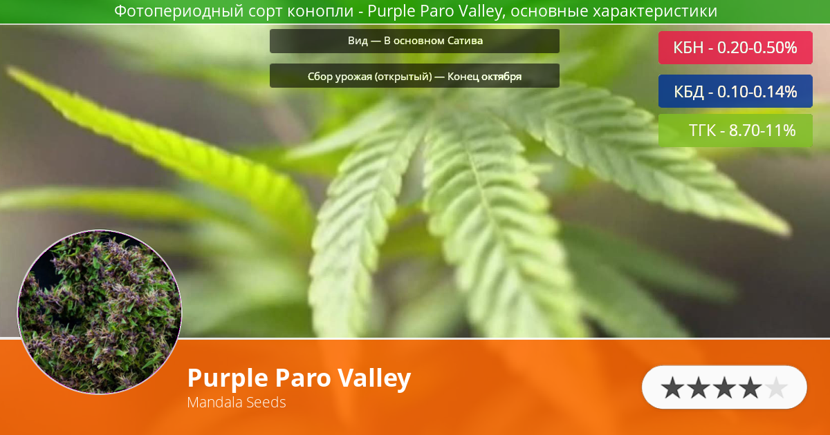 Инфограмма сорта марихуаны Purple Paro Valley