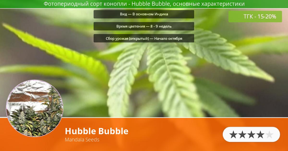 Инфограмма сорта марихуаны Hubble Bubble