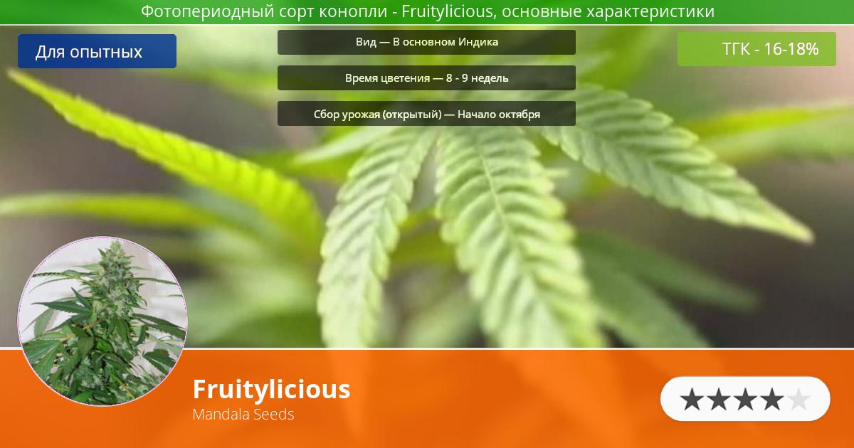 Инфограмма сорта марихуаны Fruitylicious