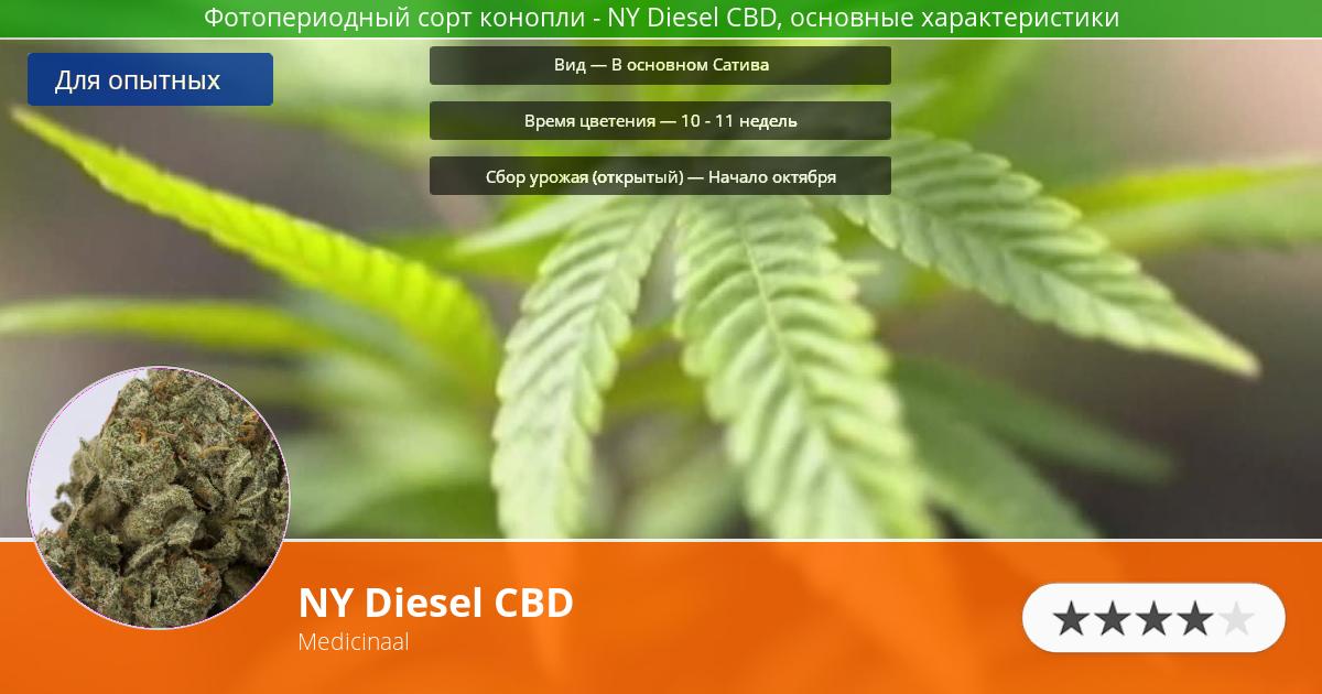 Инфограмма сорта марихуаны NY Diesel CBD