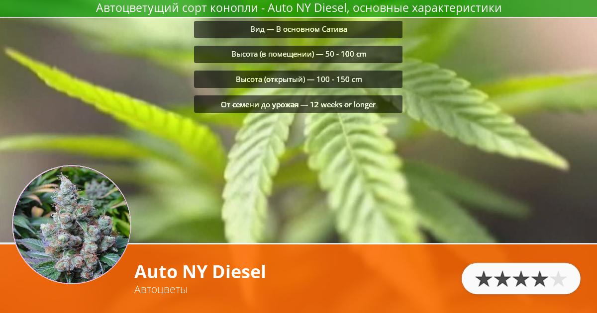 Инфограмма сорта марихуаны Auto NY Diesel