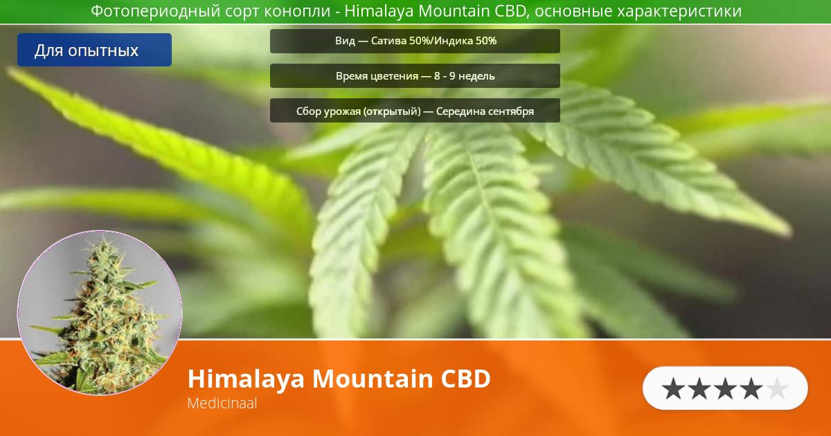 Инфограмма сорта марихуаны Himalaya Mountain CBD