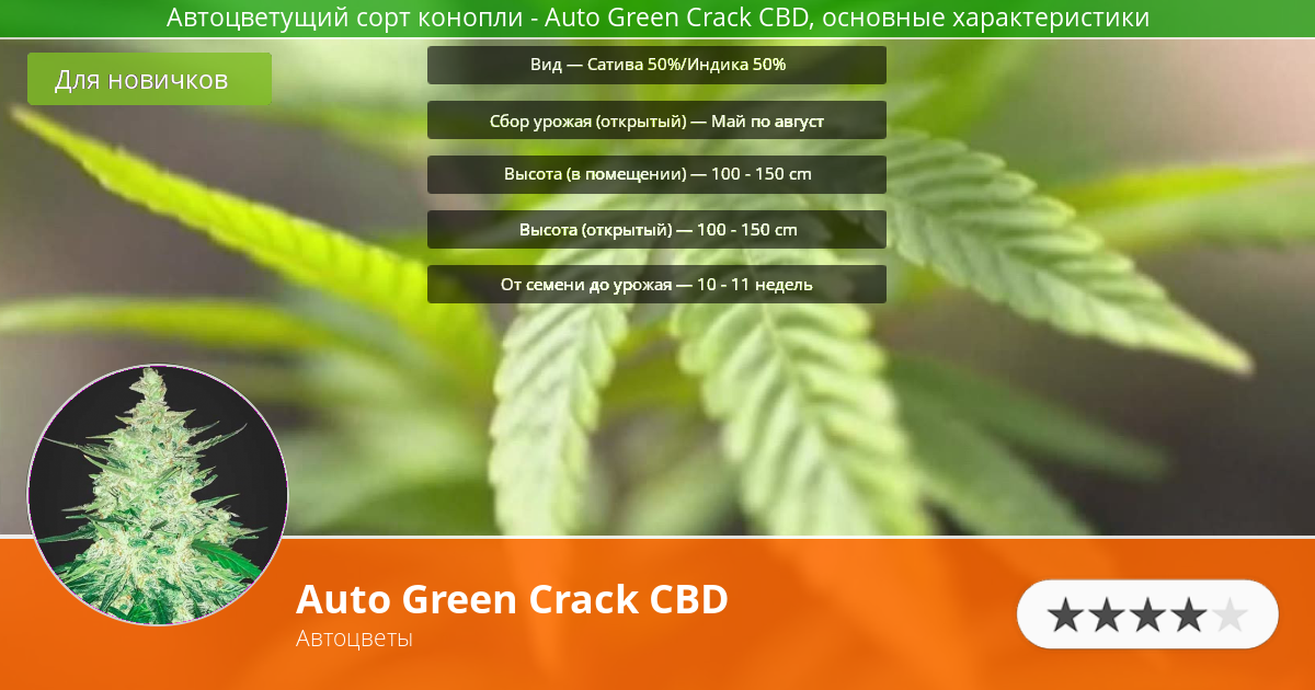 Инфограмма сорта марихуаны Auto Green Crack CBD