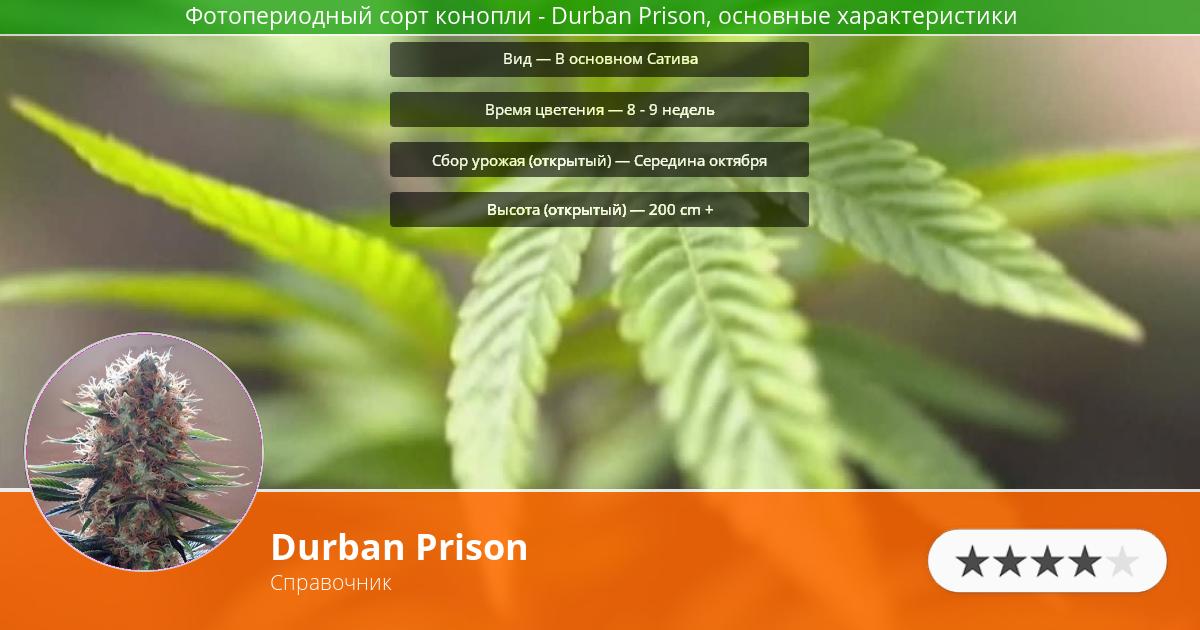 Инфограмма сорта марихуаны Durban Prison