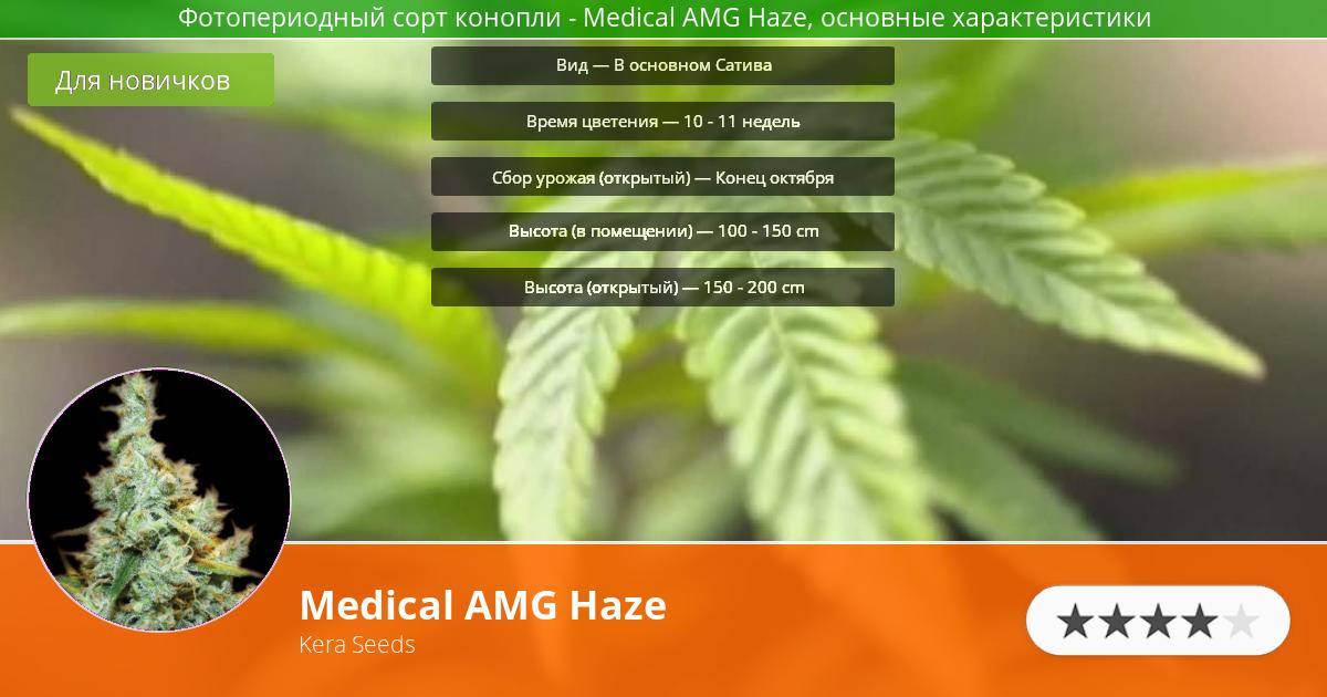 Инфограмма сорта марихуаны Medical AMG Haze