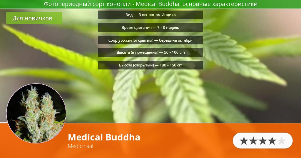 Инфограмма сорта марихуаны Medical Buddha