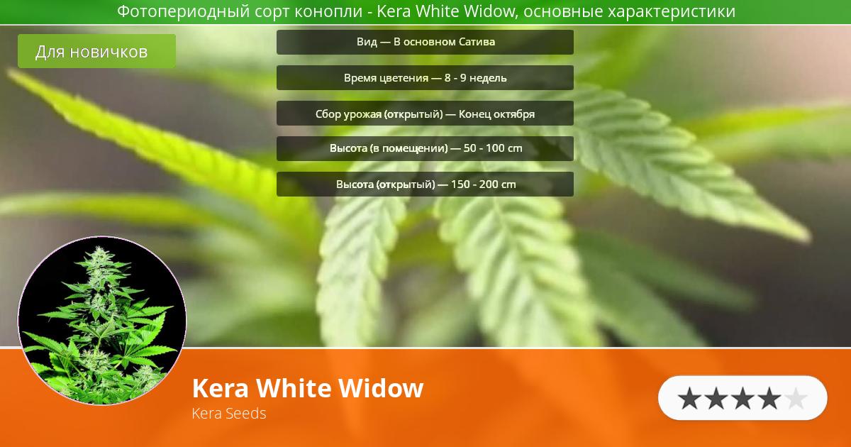 Инфограмма сорта марихуаны Kera White Widow