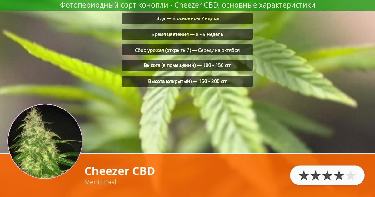 Инфограмма сорта марихуаны Cheezer CBD
