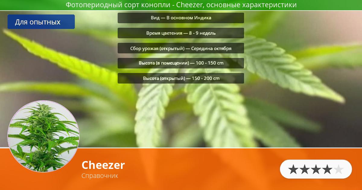 Инфограмма сорта марихуаны Cheezer