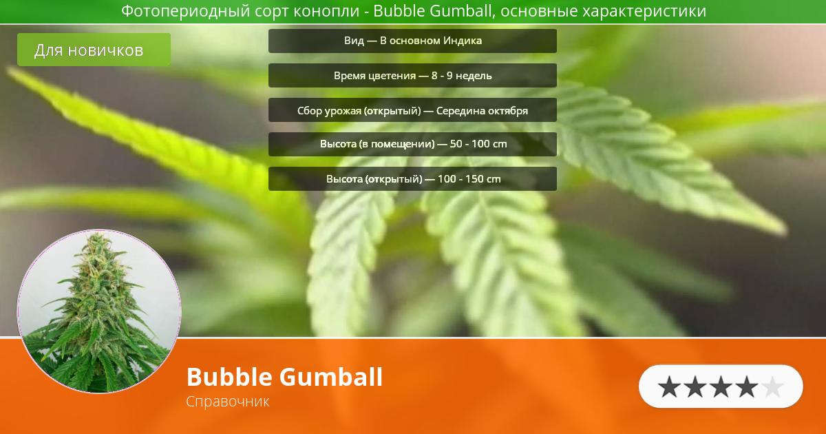 Инфограмма сорта марихуаны Bubble Gumball