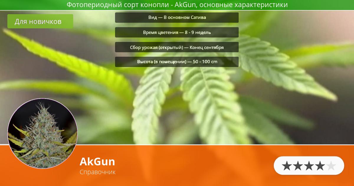 Инфограмма сорта марихуаны AkGun