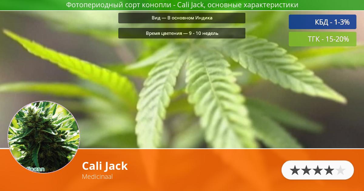 Инфограмма сорта марихуаны Cali Jack