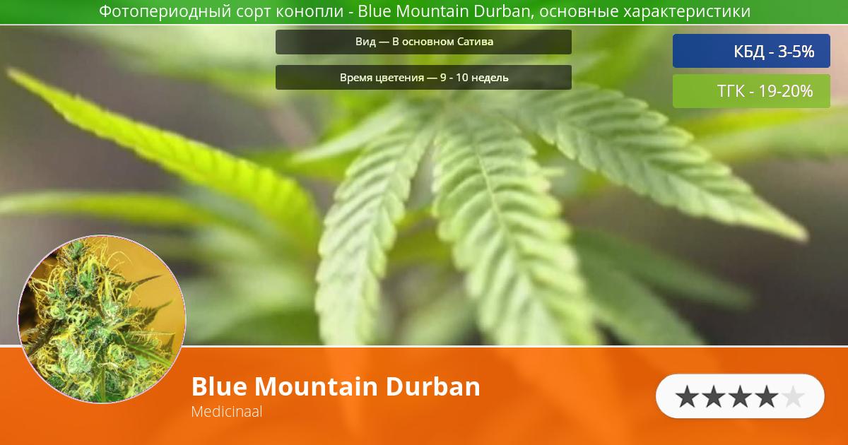 Инфограмма сорта Blue Mountain Durban