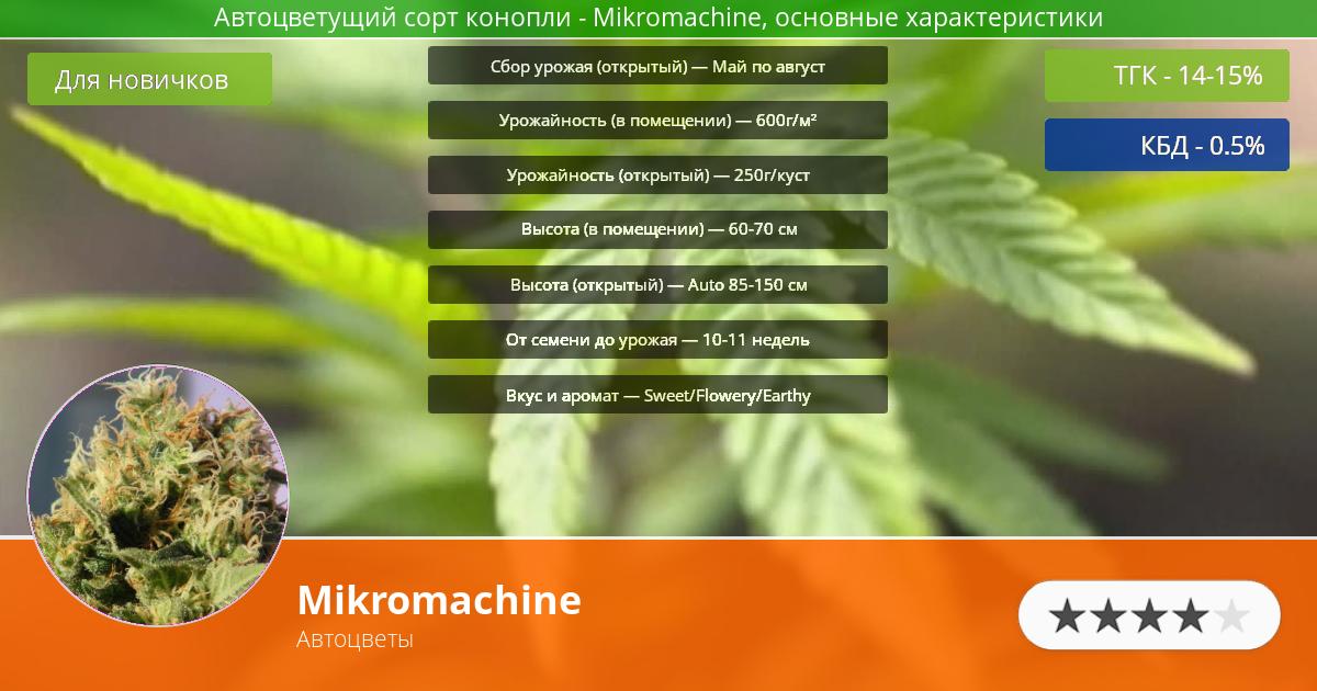 Инфограмма сорта марихуаны Mikromachine