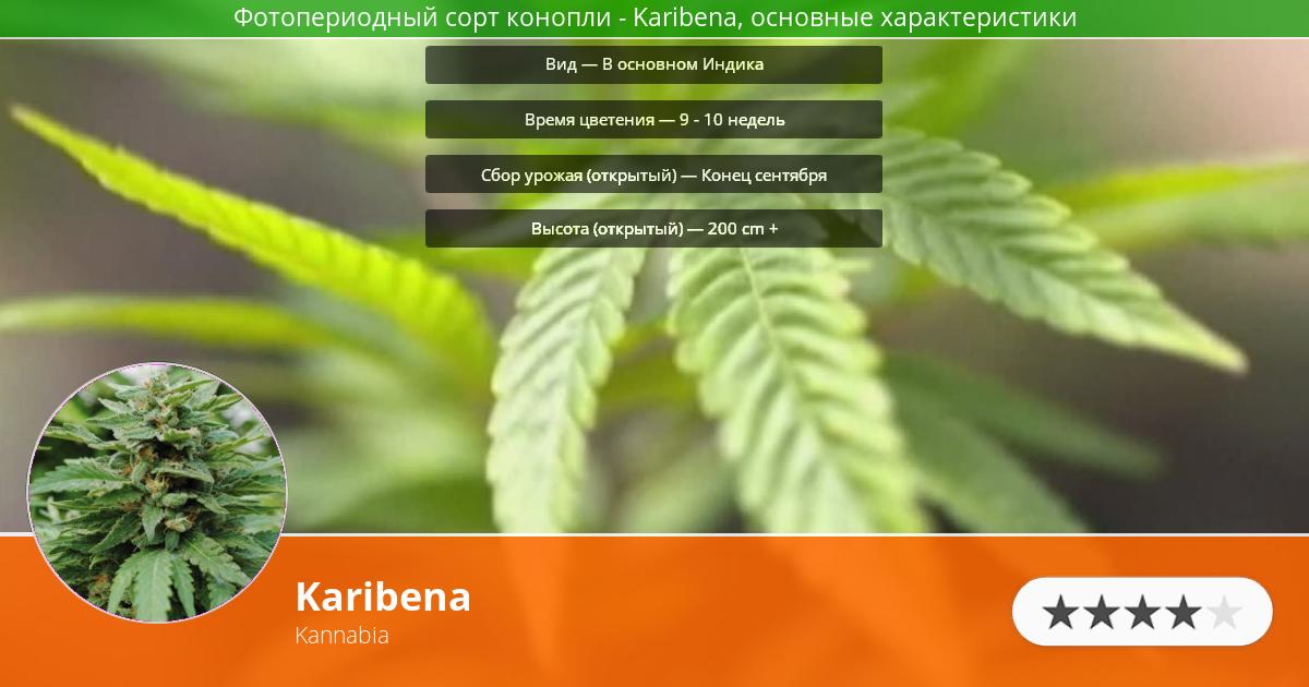 Инфограмма сорта марихуаны Karibena