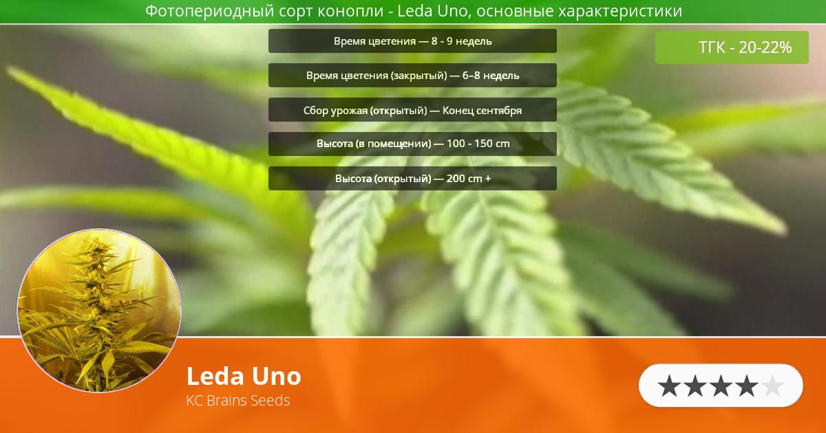 Инфограмма сорта марихуаны Leda Uno