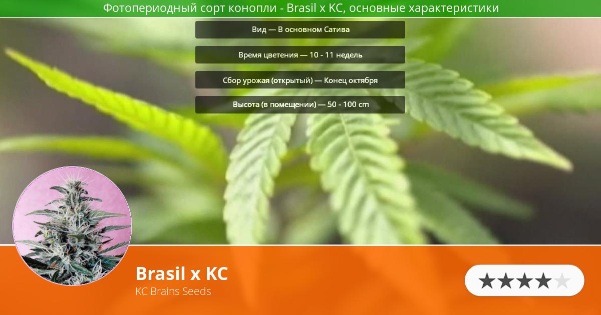 Инфограмма сорта марихуаны Brasil x KC