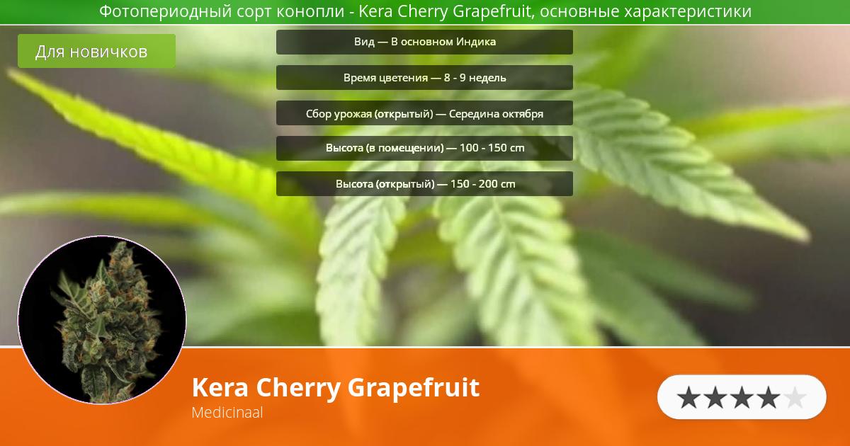 Инфограмма сорта марихуаны Kera Cherry Grapefruit