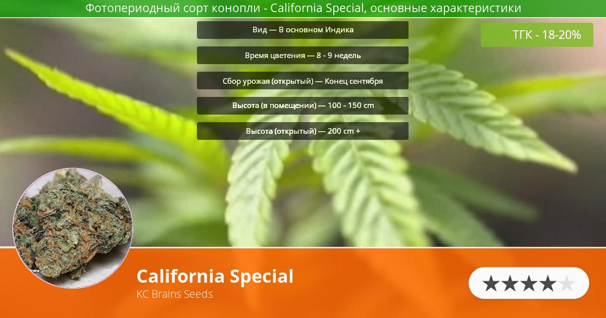 Инфограмма сорта марихуаны California Special