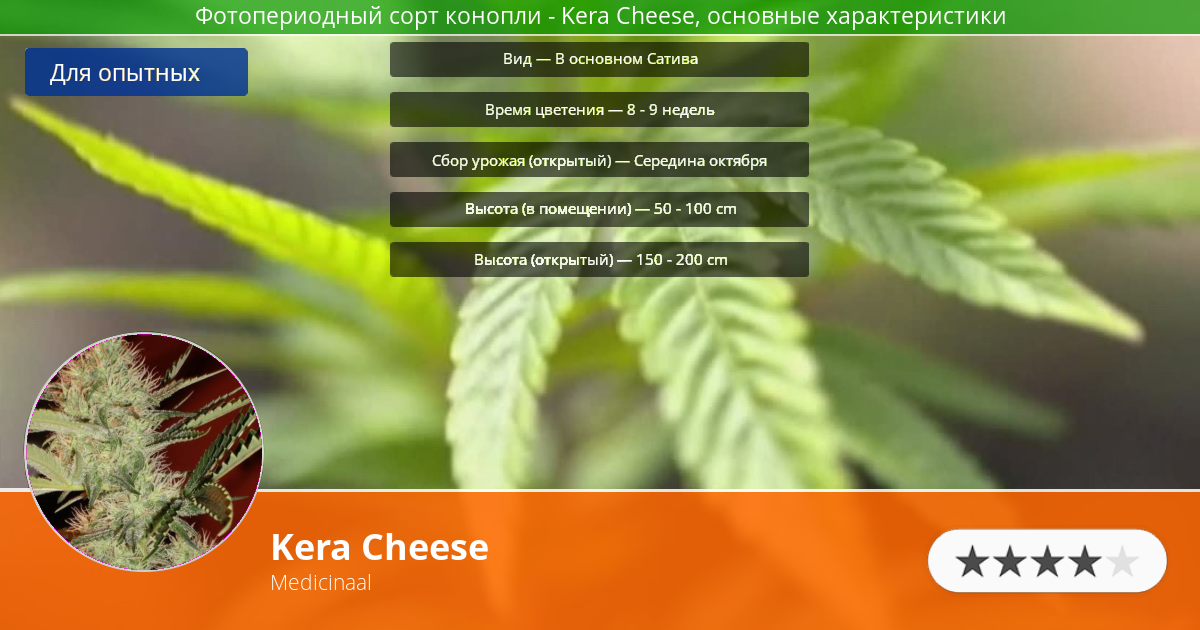 Инфограмма сорта марихуаны Kera Cheese