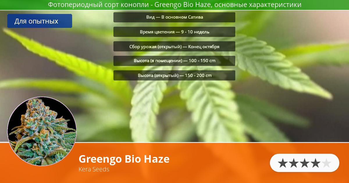 Инфограмма сорта марихуаны Greengo Bio Haze