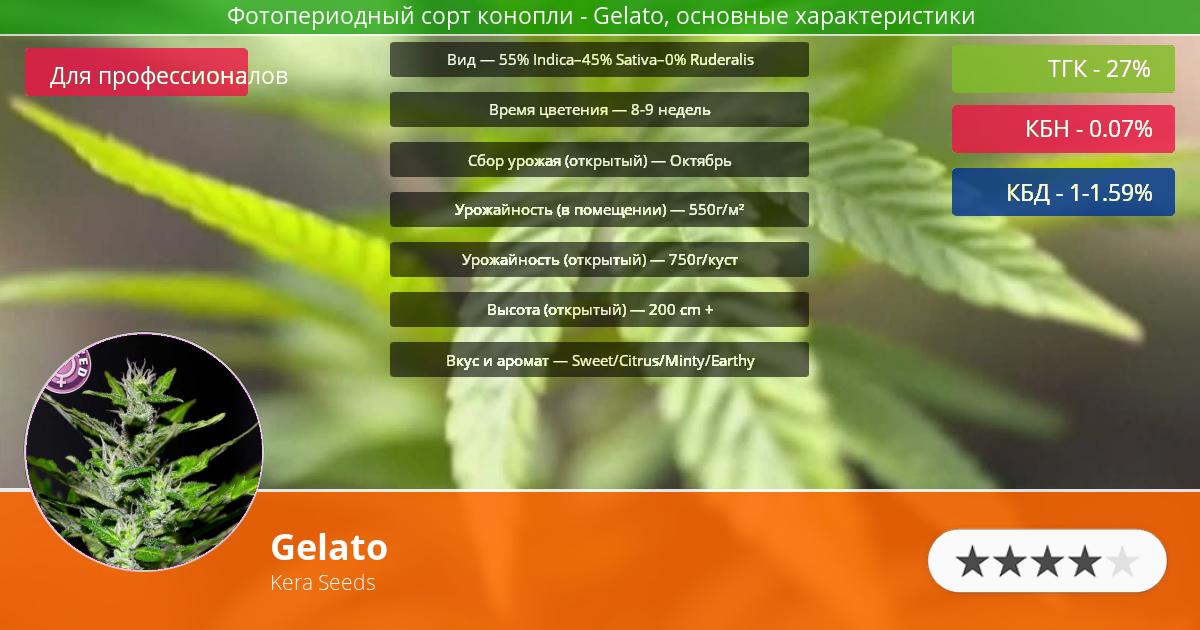 Инфограмма сорта марихуаны Gelato
