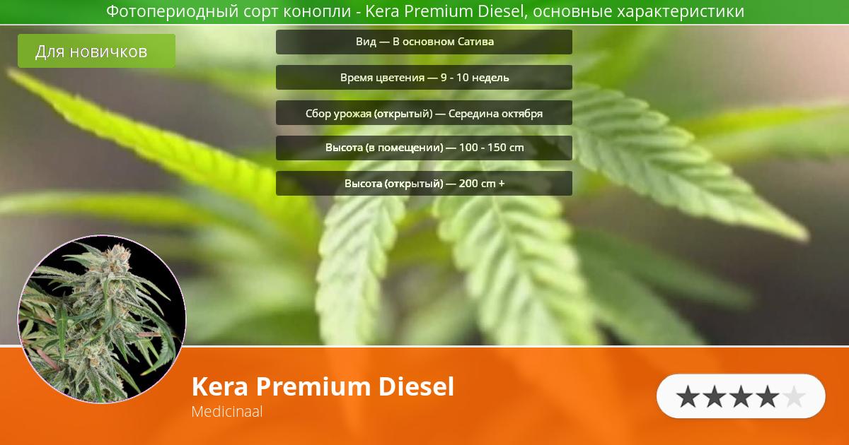 Инфограмма сорта марихуаны Kera Premium Diesel