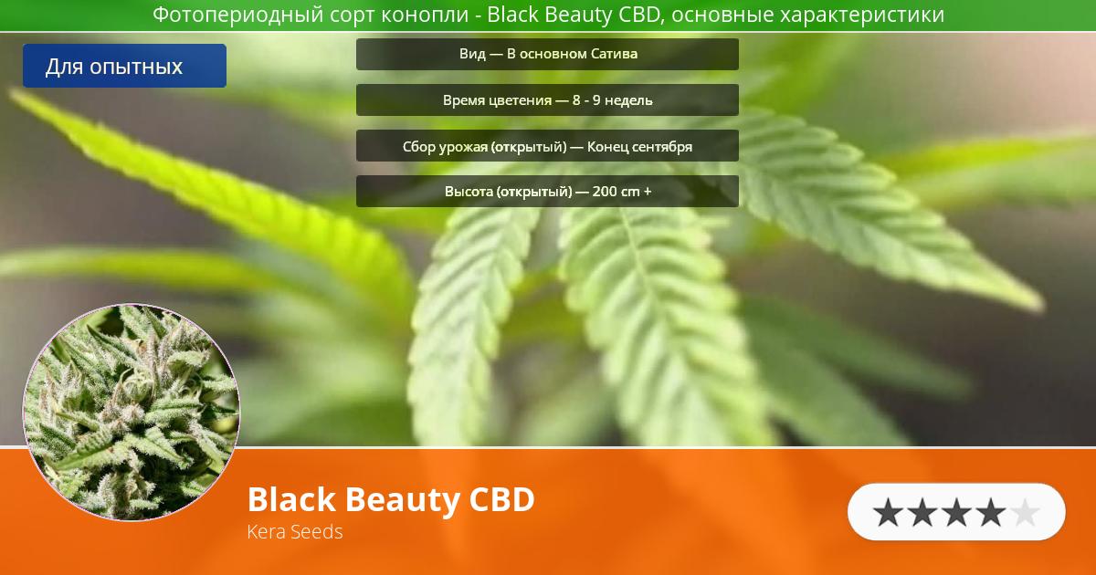 Инфограмма сорта марихуаны Black Beauty CBD