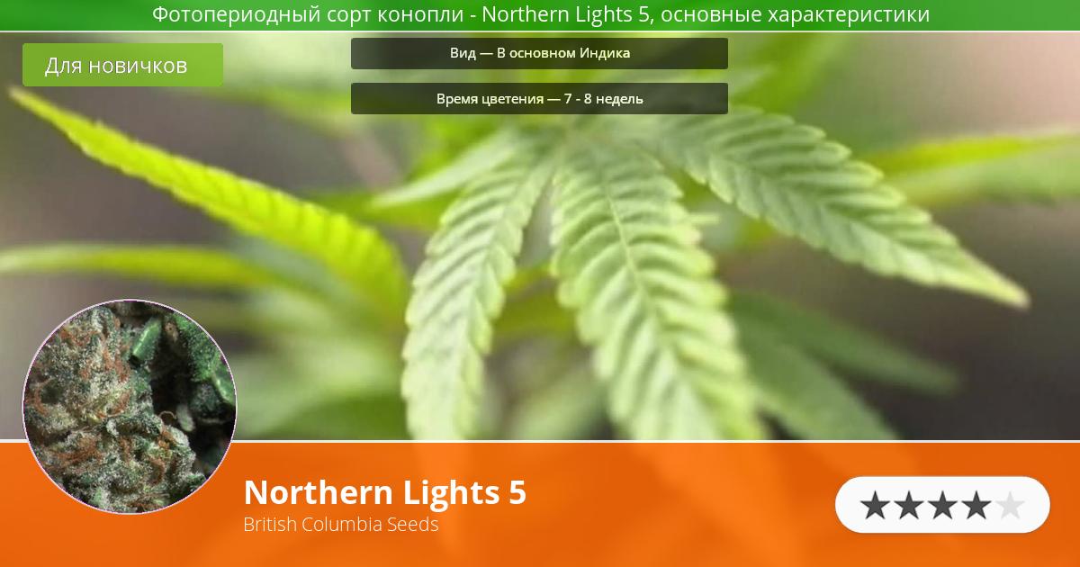 Инфограмма сорта марихуаны Northern Lights 5