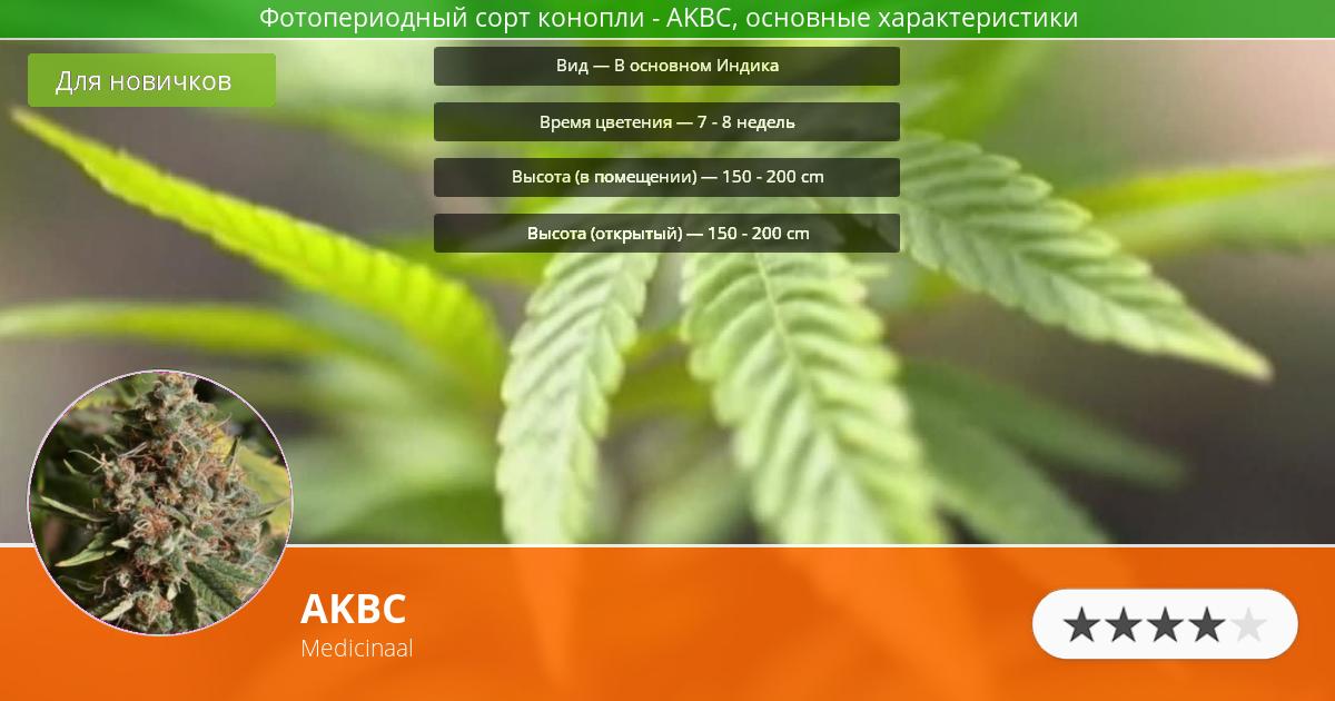 Инфограмма сорта марихуаны AKBC