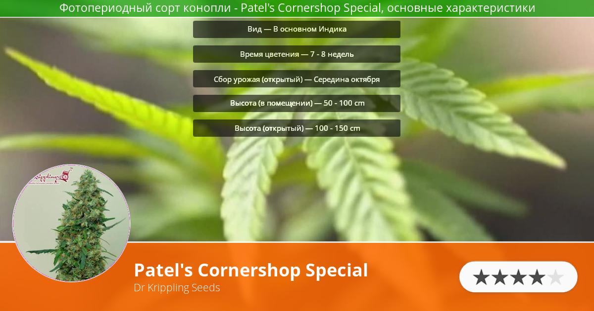 Инфограмма сорта марихуаны Patel's Cornershop Special